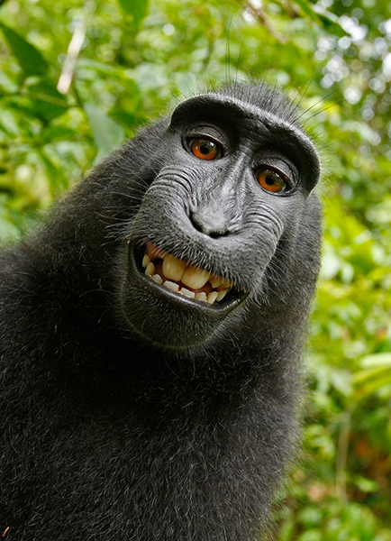 David Slater Selfie mono
