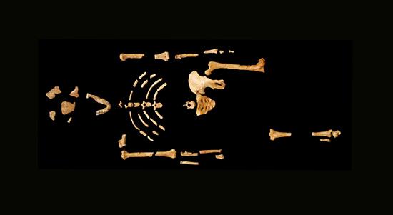 Lucy Australopithecus afarensis esqueleto