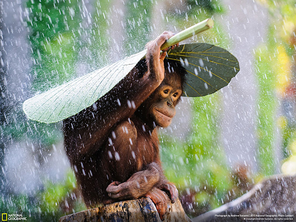 National Geographic Photo Contest 2015 Andrew Suryono