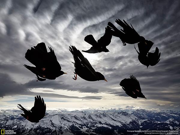 National Geographic Photo Contest 2015 Alessandra Meniconzi