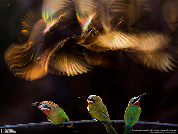 National Geographic Photo Contest 2015 Bence Mate