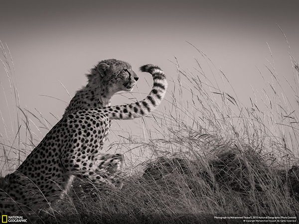 National Geographic Photo Contest 2015 Mohammed Yousef