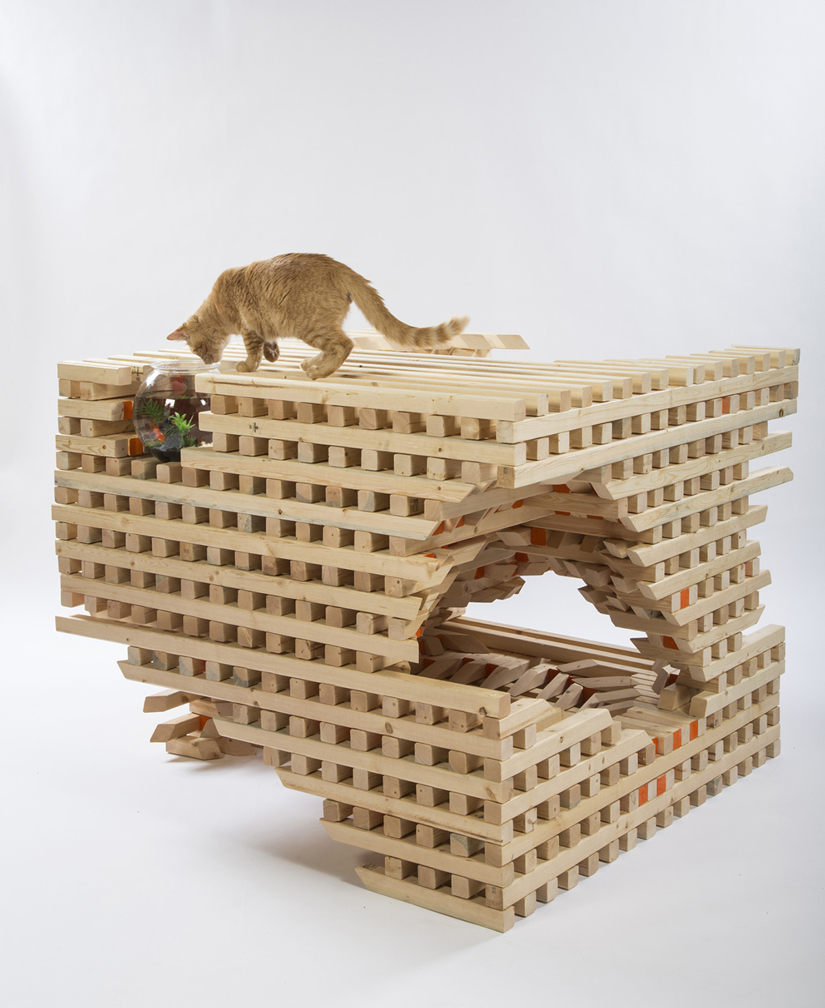 HOK-catSCAPE