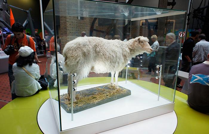 Oveja Dolly Museo de Escocia