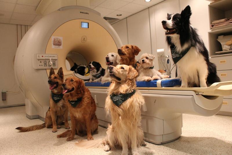 perros escaner