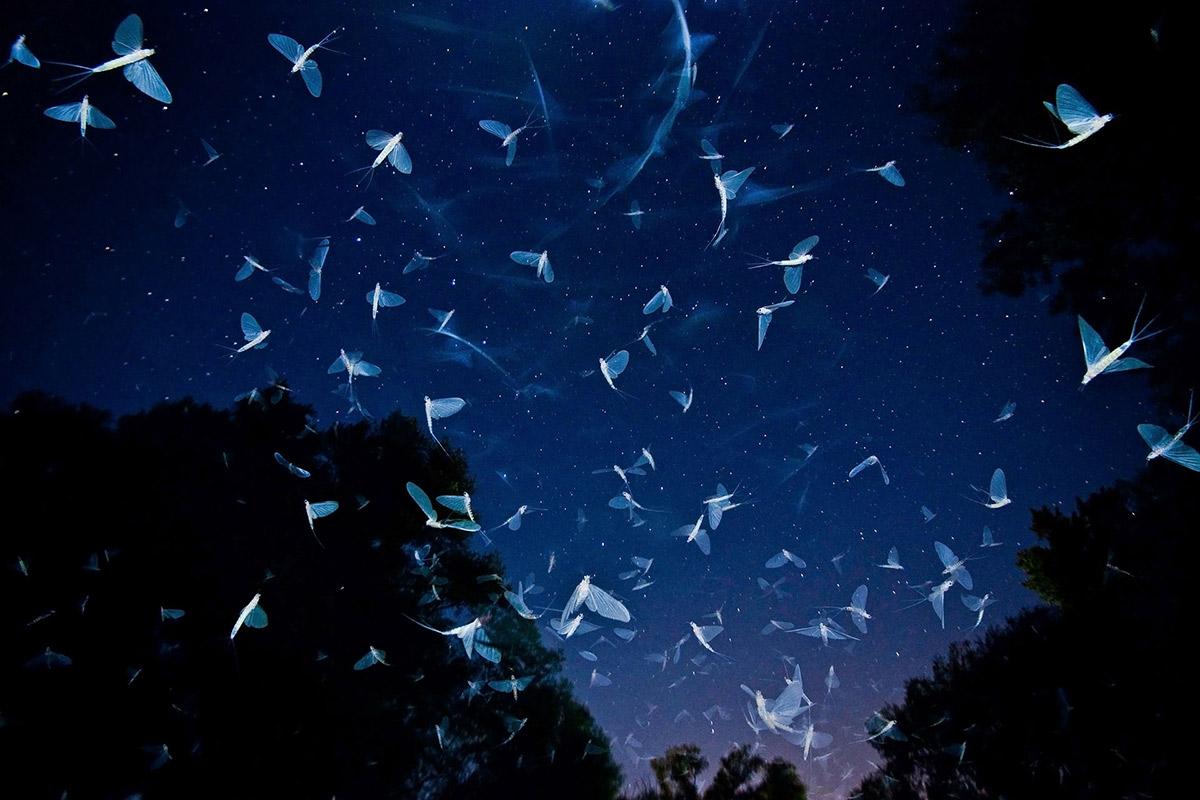 imre potyo foto insectos efimeras